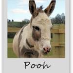 pooh-adopt-a-donkey