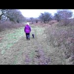 Hearing Dogs for Deaf People – Jamie Came to Stay