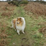 Bingley The Rough Collie Visits for Another Weekend