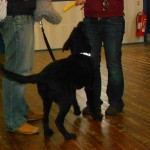 Puppy Class Attended for The Hearing Dogs For Deaf People