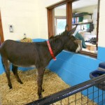 Chocolate and Paddy Join The Ivybridge EST Centre