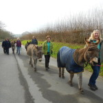 Donkey Walking in Ivybridge