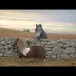 Dance Pony Dance 3 Mobile Shetland Pony Moonwalking Video