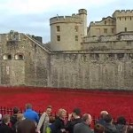 Sea Of Poppies At The Tower Of London