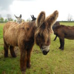 Volunteers Day At Sidmouth Donkey Sanctuary May 2016