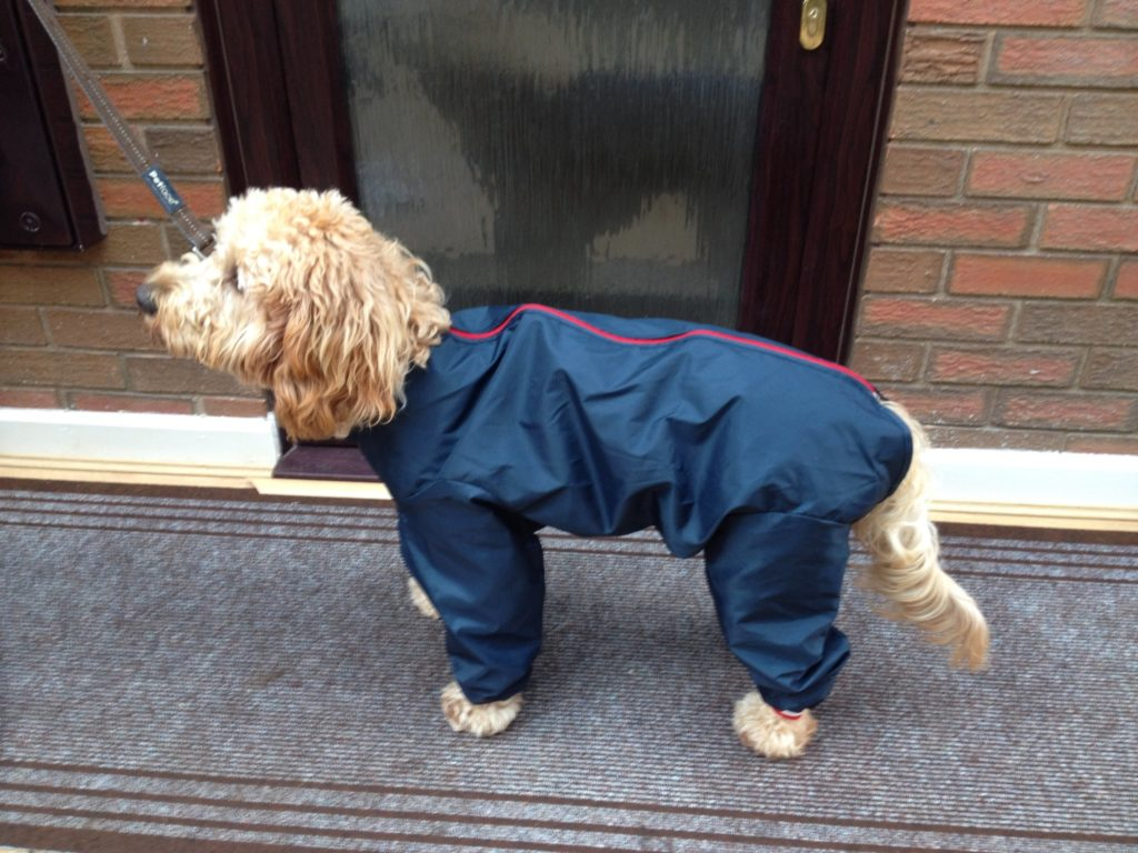 Archie the Clumberdoodle's All In One Suit