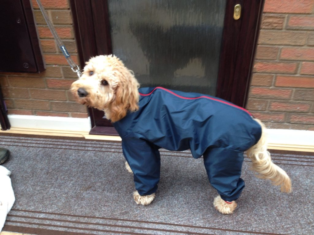 Archie the Clumberdoodle All In One Suit