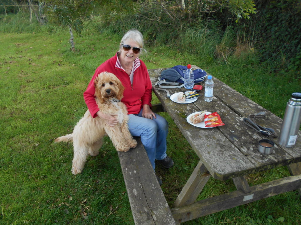 Archie the Clumberdoodle enjoying a picnic