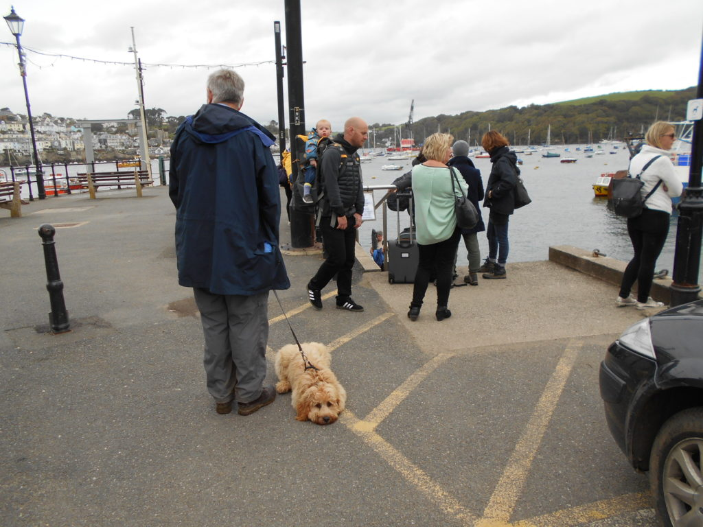 Clumberdoodle Archie Waiting for the Polruan Ferry
