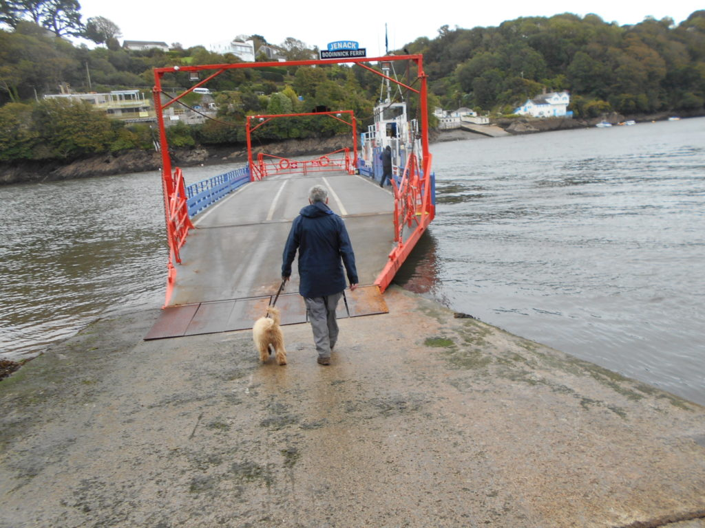 Archie the Clumberdoodle bouarding the Fower Car Ferry