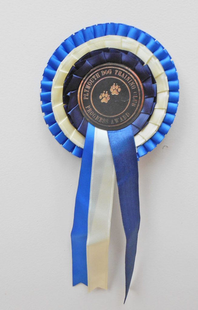 Archie the Clumberdoodle wins a rosette