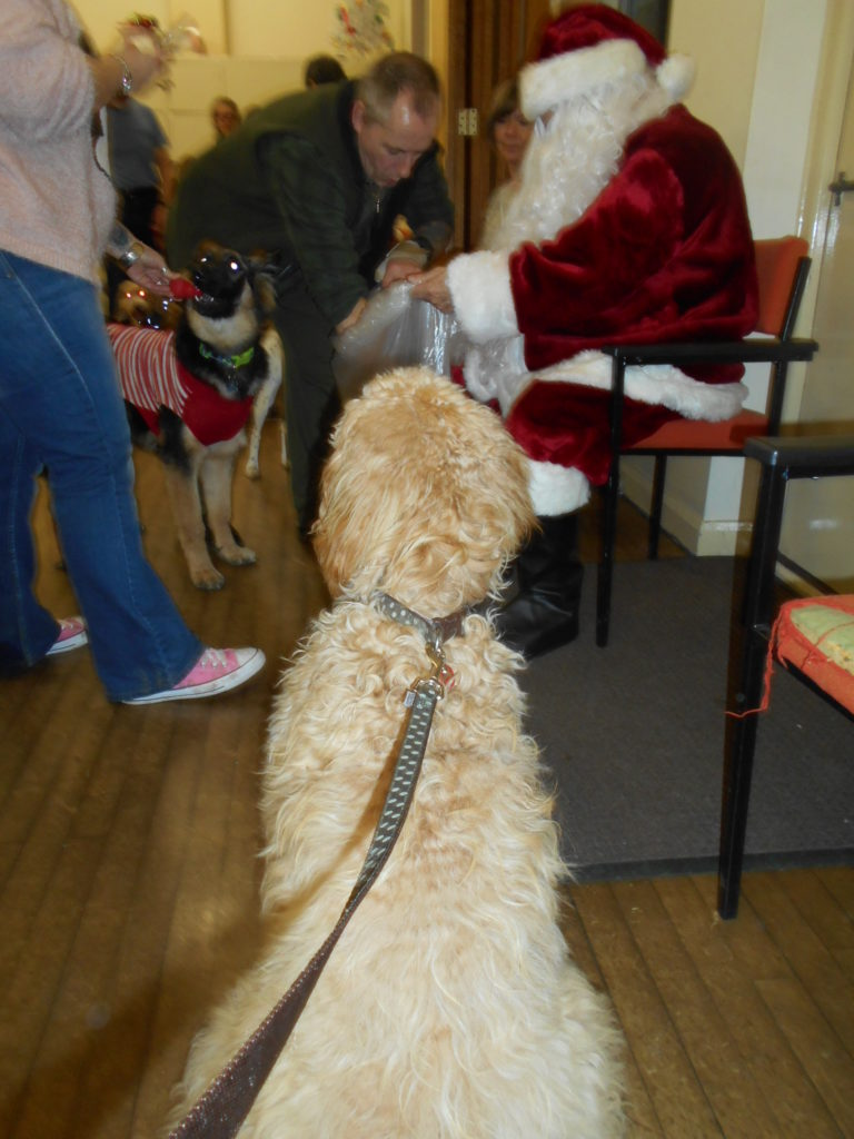 Archie the Clumberdoodle & Father Christmas